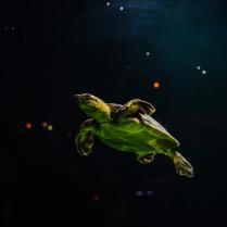 Fly little guy.