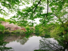 Happy Friday, dearest Friends. Here's a snap from Shinjuku Gyoen National Garden, Tokyo, Japan. Such a magical place!